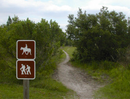 One of the non-biking trails at Alafia River State Park