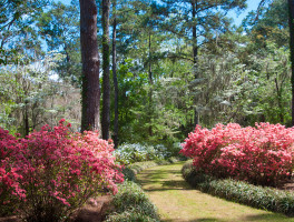 Alfred B. Maclay Gardens State Park