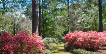Blooming season at Maclay Gardens