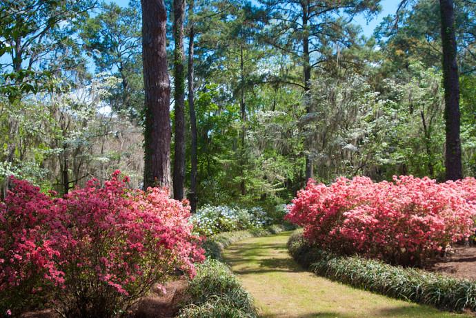 Blooming season at Maclay Gardens