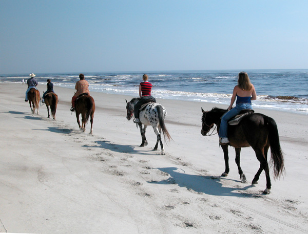 Horses at Amelia Island