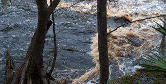 Big Shoals of the Suwannee River