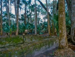 Spring house amid the plantation ruins