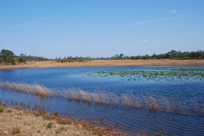 Pond at Catfish Creek Preserve