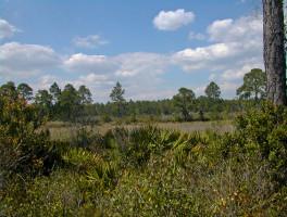 Cedar Key Scrub State Reserve