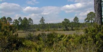 Cedar Key Scrub Preserve