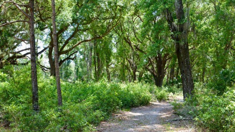 Chacala Trail Paynes Prairie