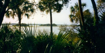 View of Crystal River