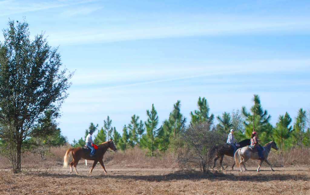 Equestrians riding the Cross Florida Greenway