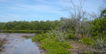 Mangrove-lined tidal flats at Estero Bay Preserve