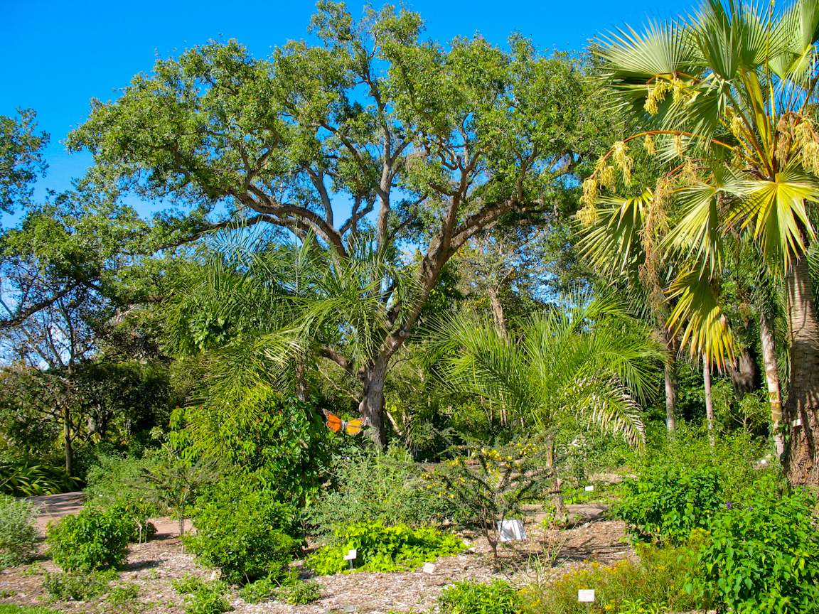 Natural attractions in florida florida hikes - Fairchild tropical botanic garden ...