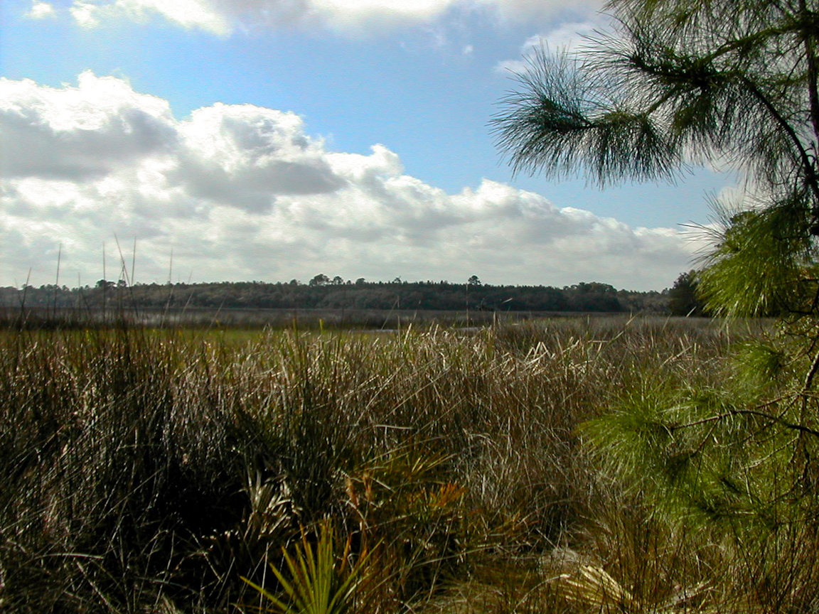 Hiking St. Augustine | Florida Hikes!