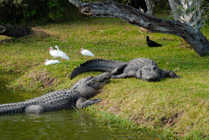 Gatorama Florida Hikes