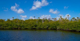 Along the Loxahatchee River