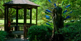 Visiting the Bottle Tree at Kanapaha Botanical Gardens
