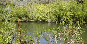 Estero River at Koreshan State Park