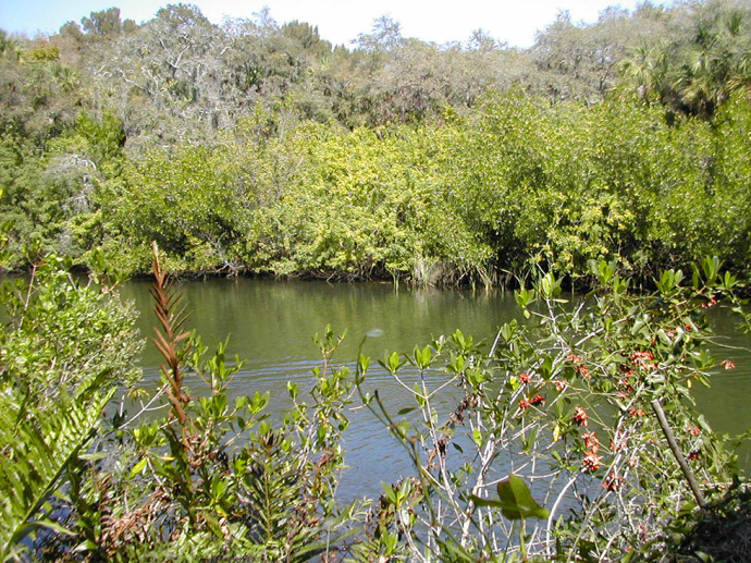 Estero River at Koreshan State Park