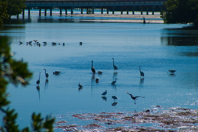 Birding is superb at Lovers Key State Park
