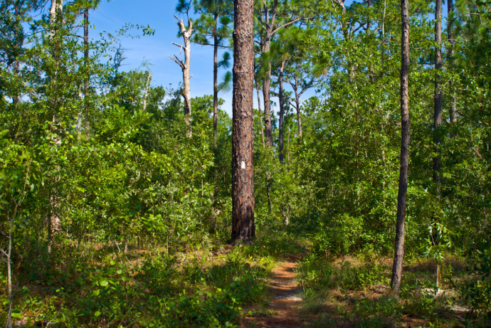 Sandhills trail