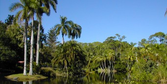 Lush tropical landscape at Caribbean Gardens