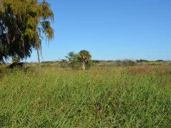Okeechobee Battlefield