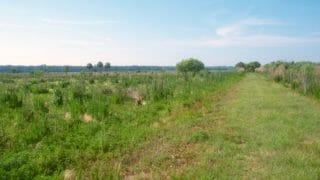 Cones Dike Trail