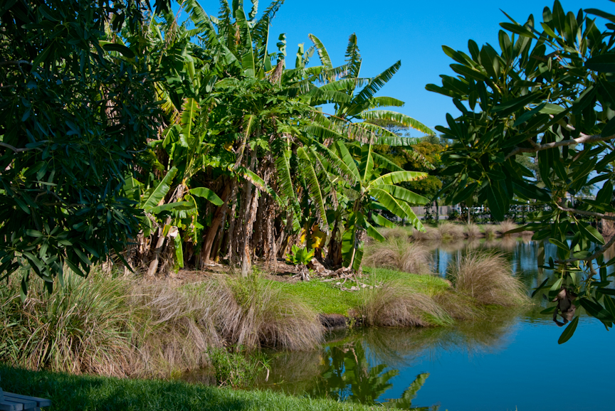 Palma Sola Botanical Park Florida Hikes