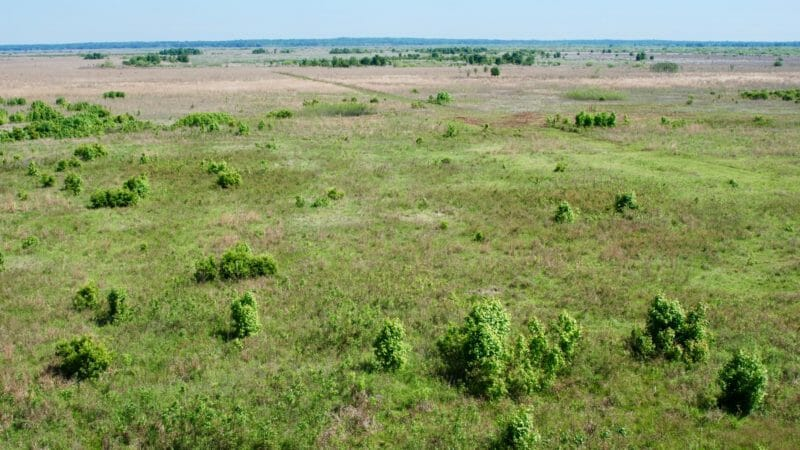 Paynes Prairie panorama from tower