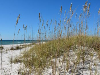 Perdido Key dunes
