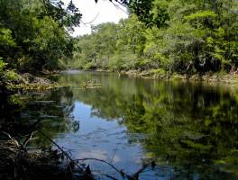 River Rise Preserve State Park