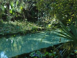 Florida Freshwater Springs Map.Springs In Florida Florida Hikes