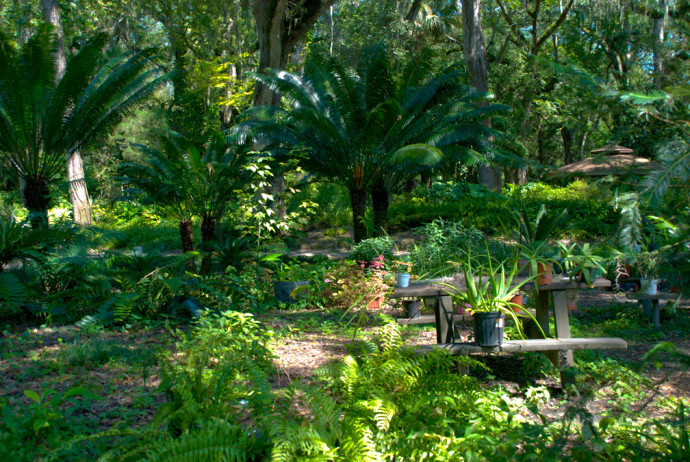 Sugar Mill Gardens | Florida Hikes!