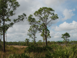 Sweetbay Natural Area