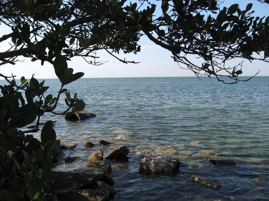 Terra Ceia Preserve