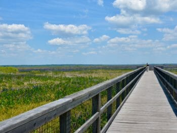 Ecopassage Observation Boardwalk