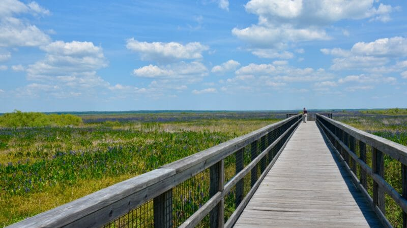 US 441 Boardwalk Paynes Prairie