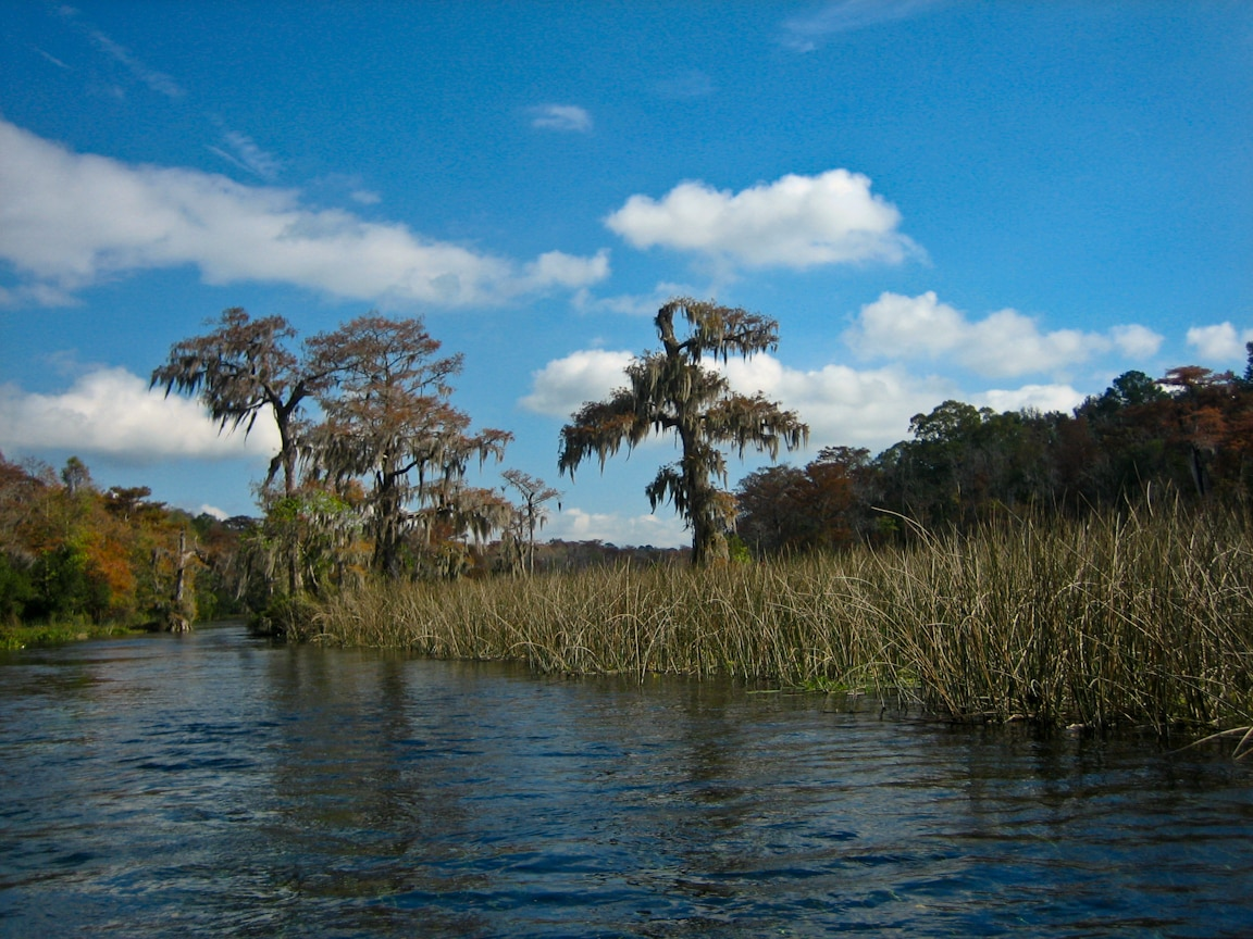 Wakulla River as seen from the boat tour