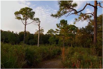 On the Scenic Drive Loop Trail (Florida State Parks)