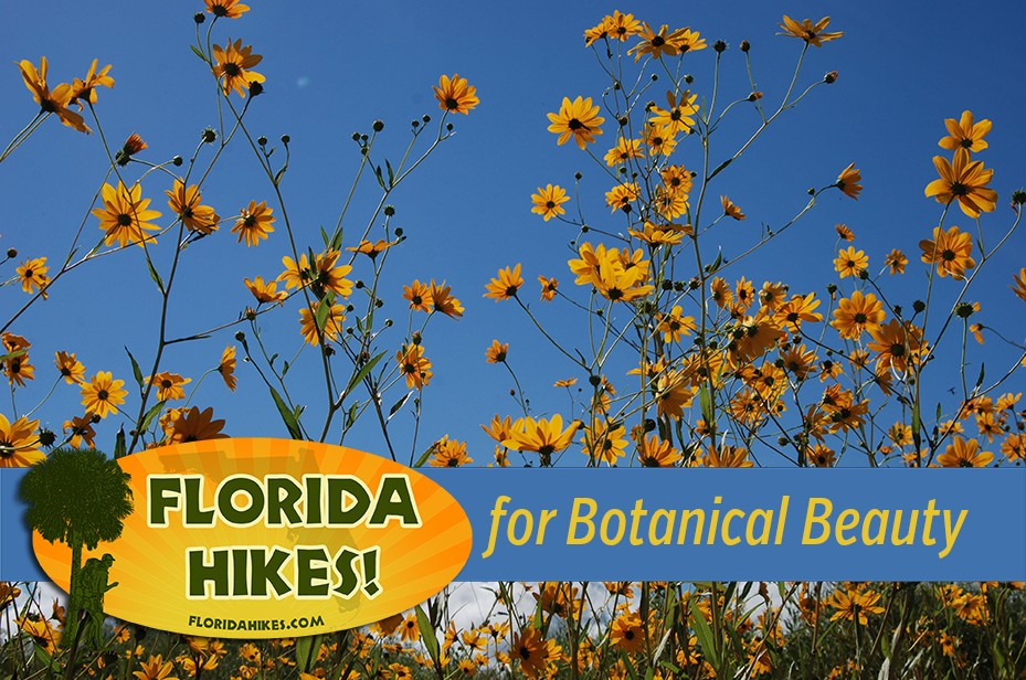 Florida Hikes for Botanical Beauty