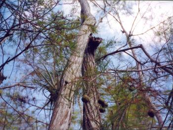 Amid the cypresses north of Loop Road