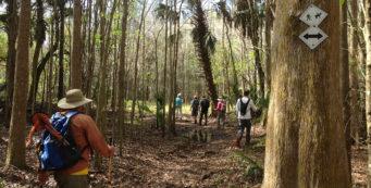 Lower Hillsborough Wilderness Preserve