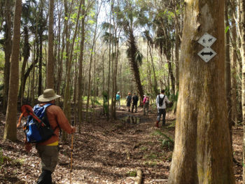 Lower Hillsborough Wilderness Preserve