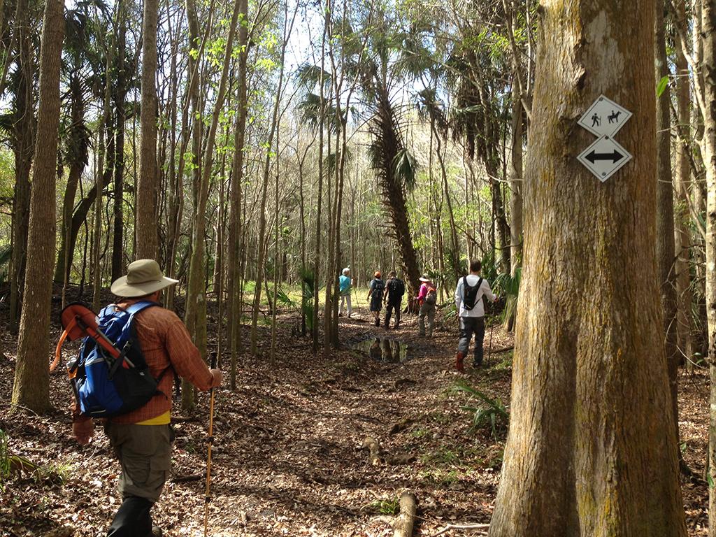 Lower Hillsborough Wilderness Preserve Florida Hikes