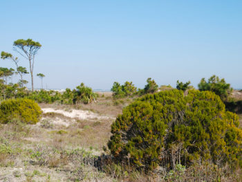 Coastal scrub at Salinas Park