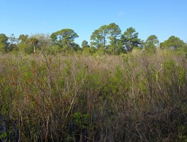 Buttonbush Marsh Overlook