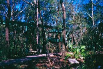 Forest Flite, March 1969 (Linda Friend)