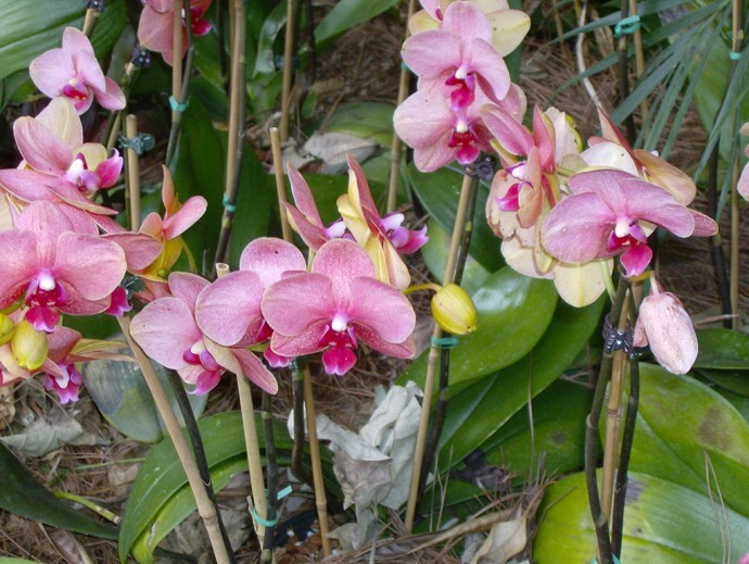 Orchids in Mexico (Linda Friend)