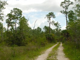 Florida Trail reopens in Big Cypress
