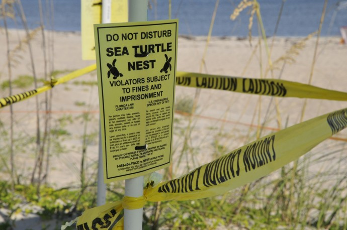 Once verified, sea turtle nests are marked (FWC)