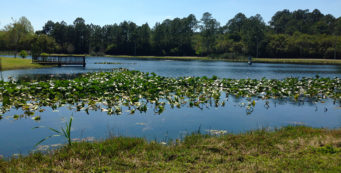 Youth fishing pond at Frank Brown Park